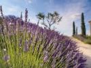 Pierre & Vacances Village Pont-Royal-en-Provence ****