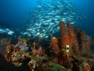 Plongée Bali liberté