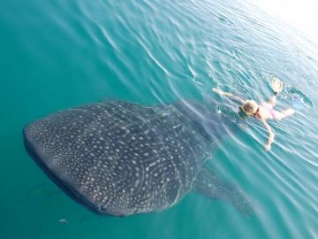 Plongée Mer de Cortez