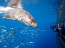 Croisère Plongée Guadalupe