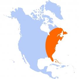 L'Est et le Sud des Etats-Unis